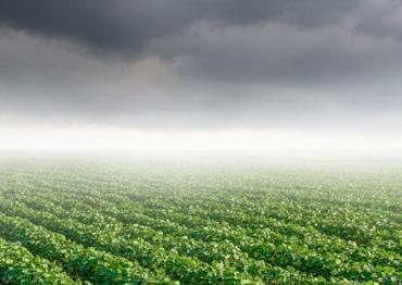 Chuvas retardam evolução da colheita de soja no Brasil