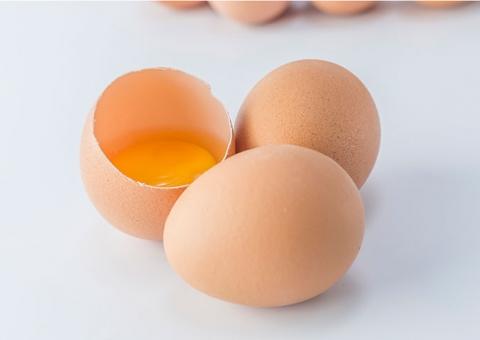 Crescem exportações de ovos em outubro, indicam análises do Cepea