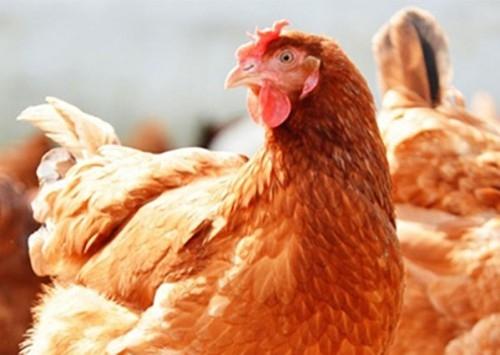 Fiscalização agropecuária é beneficiada pela definição de crueldade animal