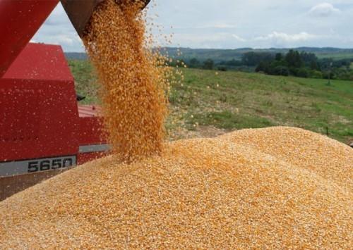 IBGE prevê em 2019 safra de grãos 0,2% menor que a de 2018