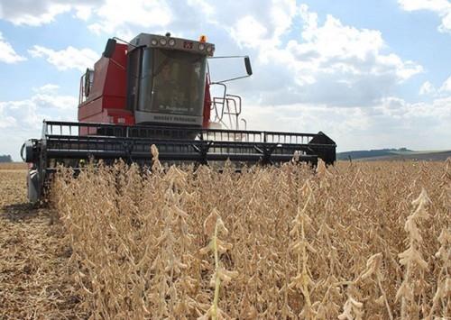 Brasil tem oportunidade de atender à demanda mundial de soja, que dobrará até 2050