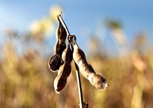 Paraguai deve aumentar produção de soja e milho em 50% até 2028