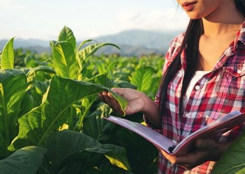 Municípios que têm base no agronegócio lideram crescimento do PIB