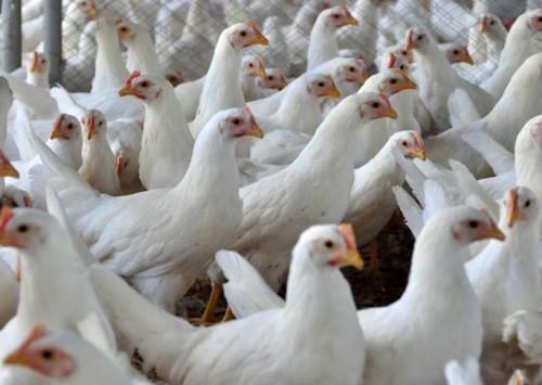 Relatório da OIE mostra mudança global no uso de antibióticos em animais
