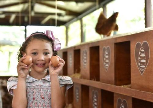 Mantiqueira lança galinheiro aberto à visitação em supermercado no Rio