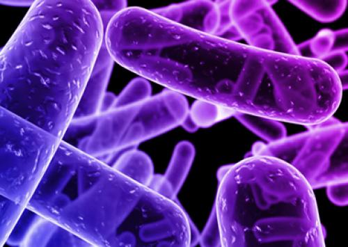 Alimentando as bactérias benéficas