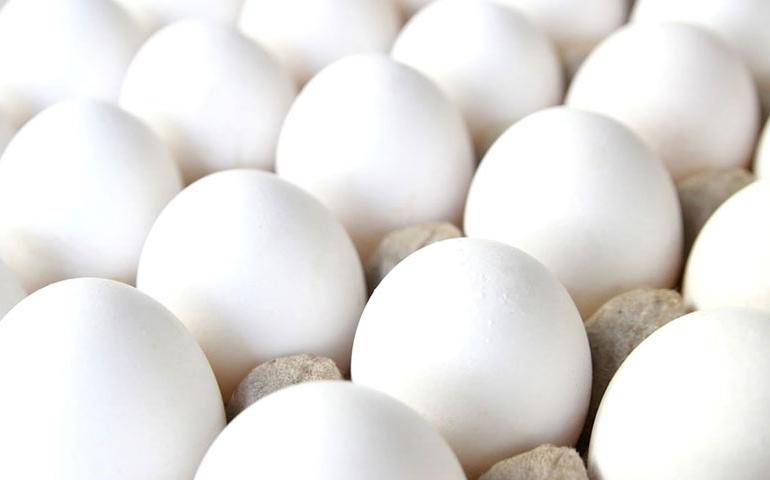 Oferta reduzida garante preços melhores para o ovo em fevereiro