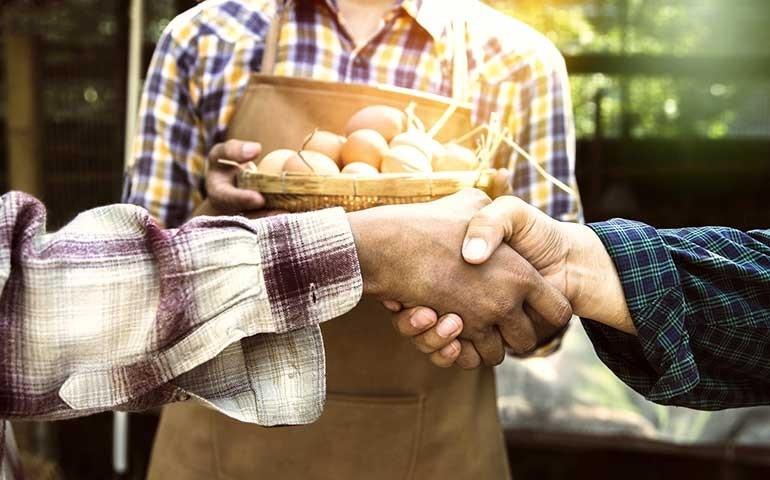 Wisium lança projeto que ajuda o avicultor a aumentar sua rentabilidade