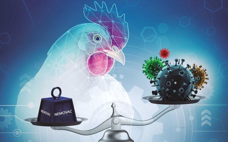 Vacinação para metapneumovírus aviário: conveniência aliada à proteção