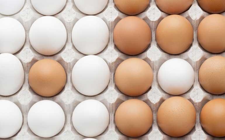 Com alta demanda e produção menor, preço do ovo continua em alta